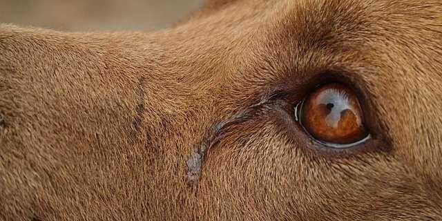 Perros son rescatados del matadero en China