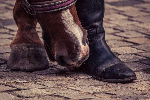 Si hay un elemento en nuestro vestuario que no puede faltar, éste son las botas