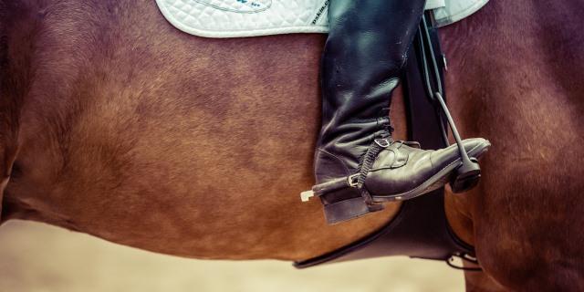 El caballo Lusitano tiene su origen en la Peninsula Ibérica.