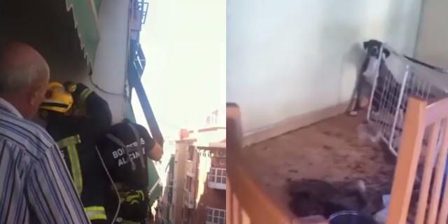 El rescate increíble de un cachorro abandonado en Alicante