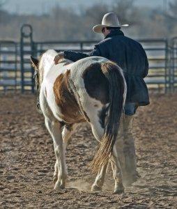 vaquero junto a caballo domado caminando juntos
