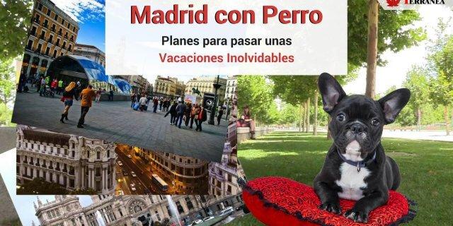 Ruta turística por Madrid con perro