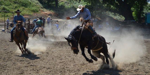 Un jinete cabalga un American Quarter Horse
