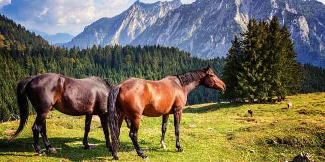 Dos caballos en las montañas.