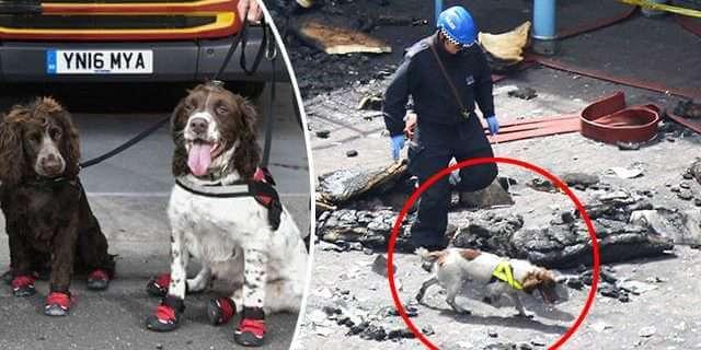 Perros buscan desaparecidos tras el incendio de Londres