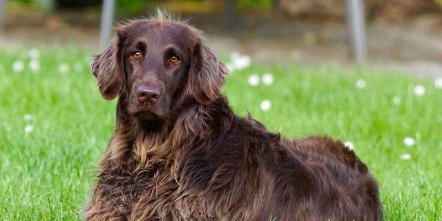 Las mascotas abandonadas siguen siendo numerosas en España.
