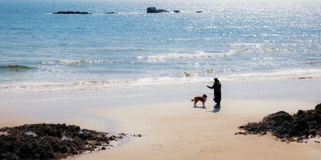Dueño jugando con su perro en una bonita playa