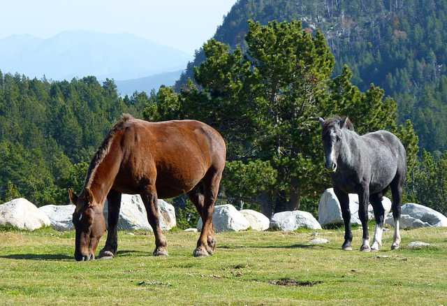 Dos equinos de diferente raza