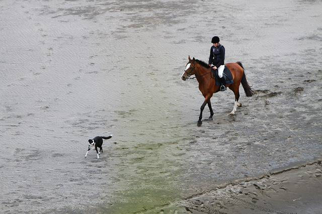 Un jinete cabalga y un perro se encuentra en su camino