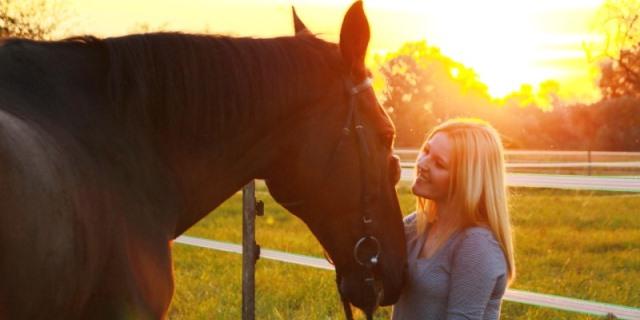 comparador de seguros para caballos