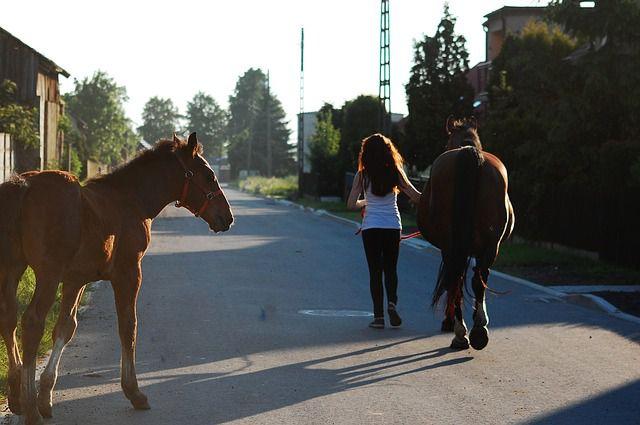 Un jinete camina junto a sus caballos
