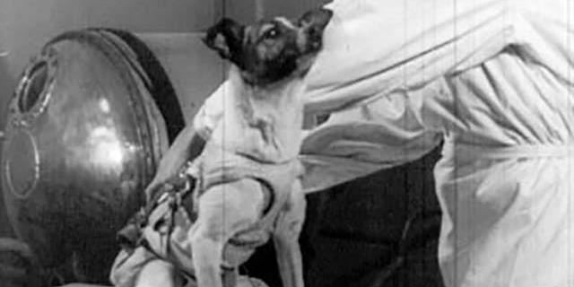 Laika, el primer perro en volar al espacio exterior.