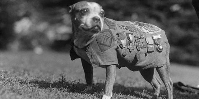 Sargento Stubby, un heroe canino.