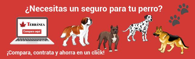 Banner de perros.