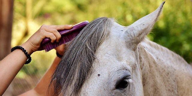 Como cuidar un caballo
