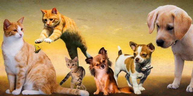Varias mascotas agrupadas en un montaje fotográfico.