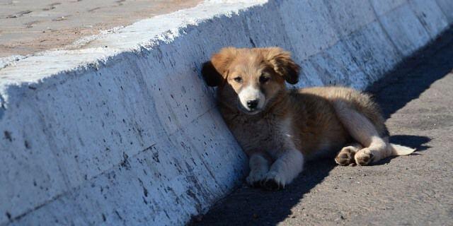 Perro abandonado en una carretera.