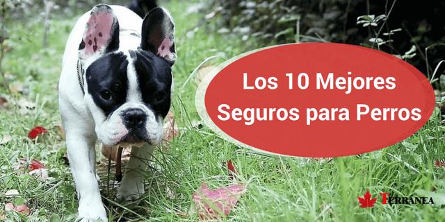 Perro que nos muestra los 10 mejores seguros para perros