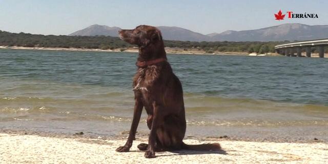 perro en una de las rutas para ir con perro de Madrid