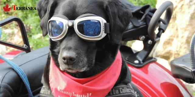 La mejor opción más barata para perros corre cerca
