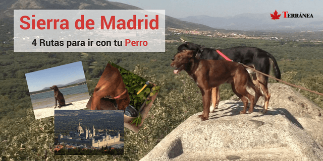 viajar a madrid con perro