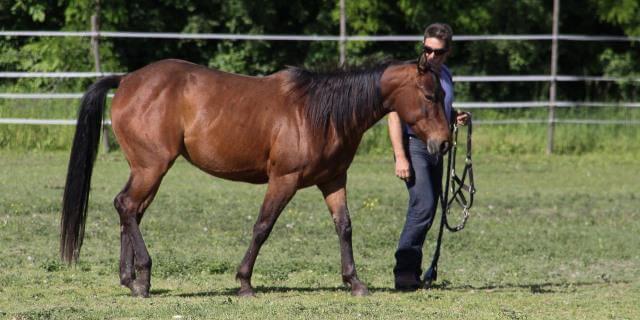 La doma natural, el vínculo entre caballo y jinete.