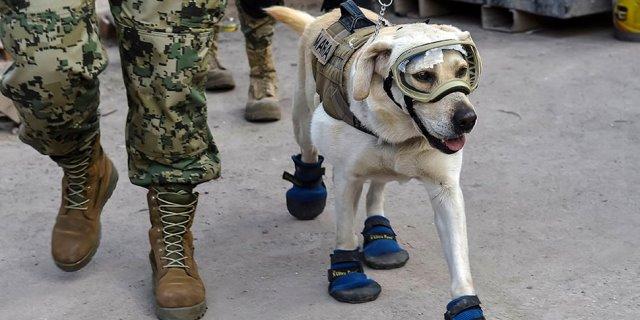 Frida, la perra de rescate protagonista