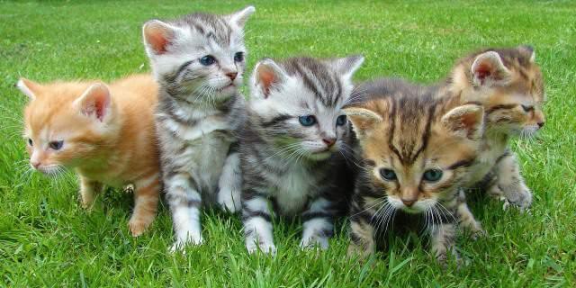 Cinco gatos pequeños en un jardín.