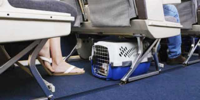 Viaja con tu mascota en avion.