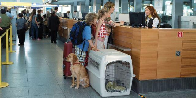 Una mascota en el aeropuerto.