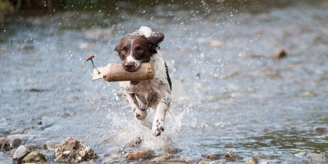 Un perro corre mordiendo un tronco