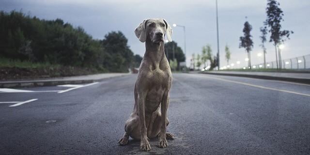 Debemos contar con un plan de emergencia para salvar a nuestra mascota