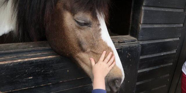 Equinoterapia: Lo que los caballos aportan a las personas.