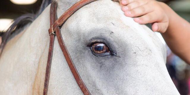 Las vacunas recomendadas para caballos.