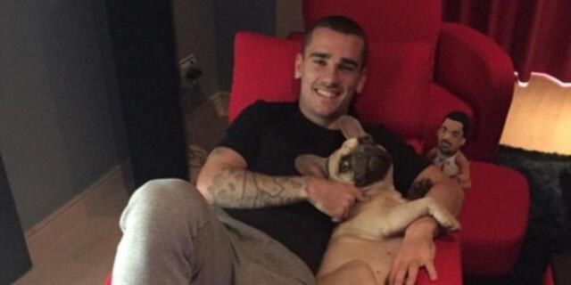 Griezmann posando con su bulldog francés.