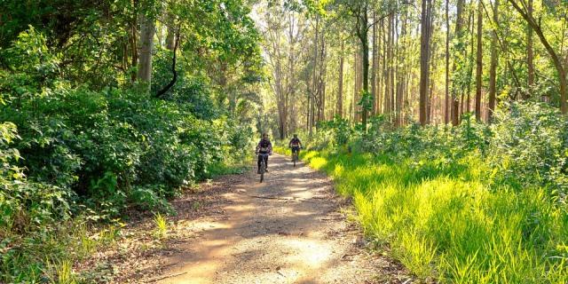 Dos ciclistas recorriendo un camino con zonas verdes a su alrededor.