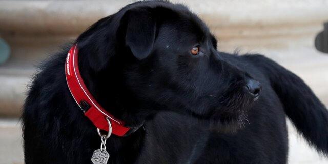imagen del perro nemo
