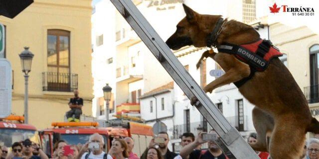 Perro Policía se dispone a rescatar a una mujer secuestrada en Ronda