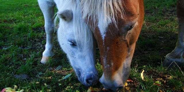 Las vacunas que necesita mi caballo.