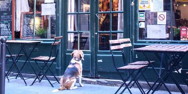 Los perros podrán acceder a los establecimientos en Portugal