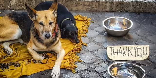 imagen de perros vagabundos
