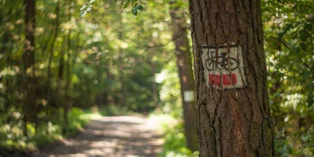 Árbol con señal de ruta ciclista