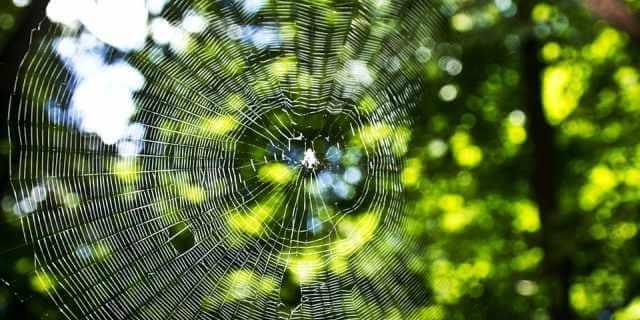 Araña en su telaraña en un árbol.