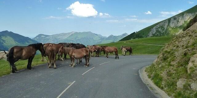 Accidente de tráfico provocado por caballos sueltos.