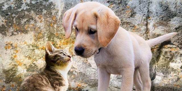 Variante británica en un perro y un gato