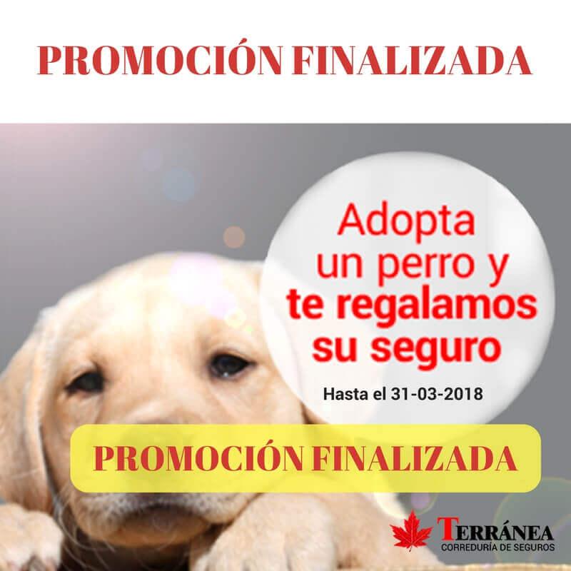 seguro perro adoptado gratis