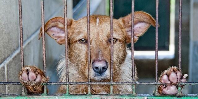 perro abandonado enjaulado en un refugio