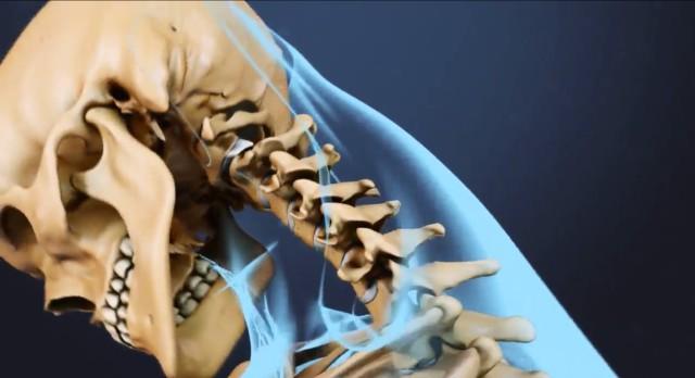 Cuello de una recreación de un esqueleto humano.