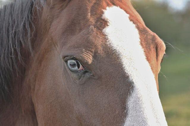 Ojo de un caballo