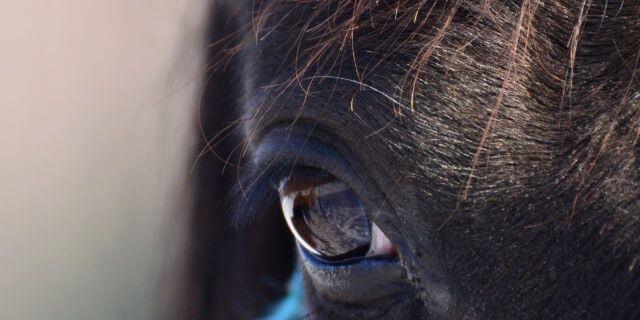 Ojos de un caballo